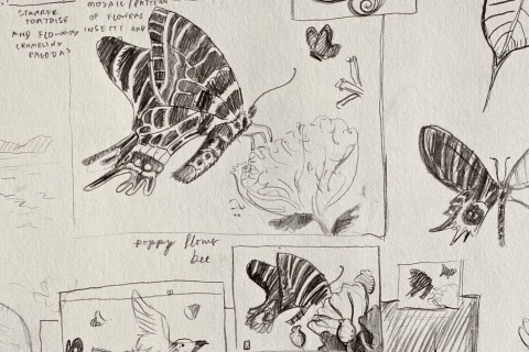 Composition sketches for of the Bhutan glory butterfly with flowers.