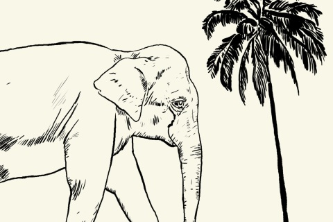 Work in Progress - an older version of the print featuring an Asian Elephant.